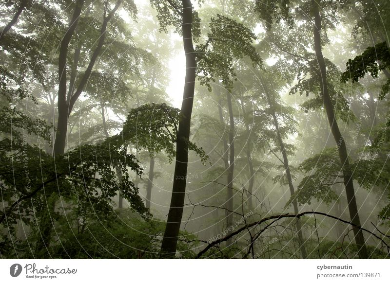Zauberwald Wald Baum Unterholz Nebel Nieselregen grün Ast Wetter Jagd
