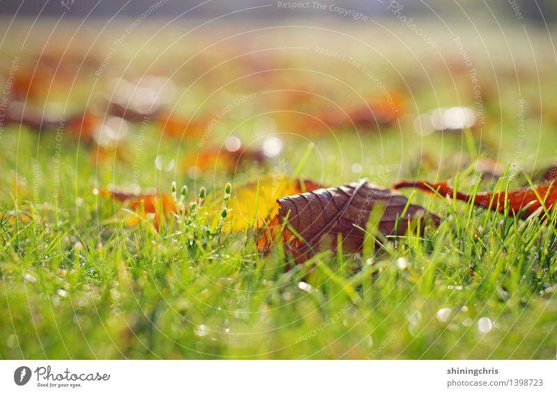 herbstmorgen. Natur Herbst Klima Blatt Garten Park Wiese Freundlichkeit Wärme ruhig Tau glänzend Farbfoto Außenaufnahme Menschenleer Textfreiraum oben