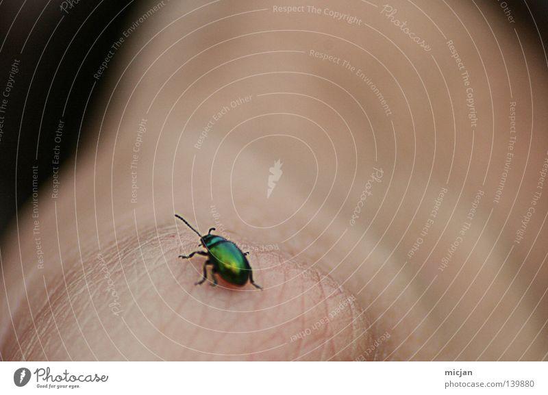 H08 - Photocase-Bug Käfer Schiffsbug klein Makroaufnahme Hand Haut hinten fliegen grün schimmern Beleuchtung krabbeln Insekt niedlich festhalten Unschärfe