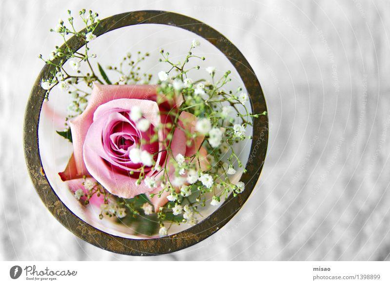 rosa Blume im Glas Natur Pflanze Rose Blüte Schalen & Schüsseln braun grün weiß Glück Vorfreude Verliebtheit Romantik Neugier ästhetisch Tisch Feste & Feiern