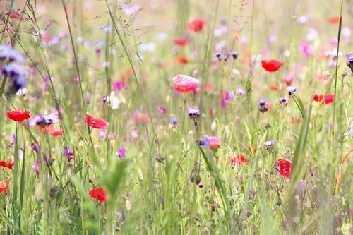da is er wieder, der mo(h)ntag! Natur Pflanze schön Sommer Blume Blatt Blüte Frühling Wiese Gras Garten Park Wachstum frisch Blühend Schönes Wetter