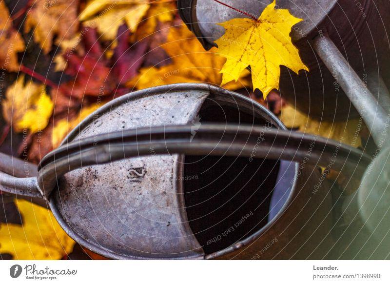 Herbstlich schön Wasser Sonne Blatt gelb grau Kunst Garten Metall Park Idylle gold Fröhlichkeit ästhetisch Neugier
