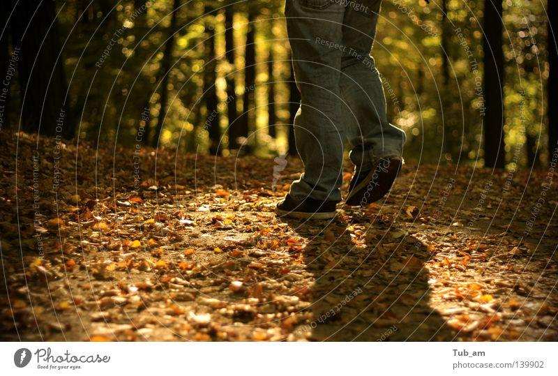 Füße im Licht Blatt Wald Herbst fallen Beine Schuhe Schuhsohle Schatten Fleck Baum laufen gehen Spaziergang Waldspaziergang dreckig drehen orange grün Jeanshose