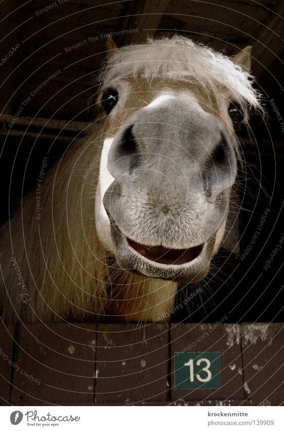 Glückliche 13 Freude Tier Holz lachen Pferd Fröhlichkeit Ziffern & Zahlen Bauernhof Säugetier Reitsport Stall Mähne Haus Pechzahl