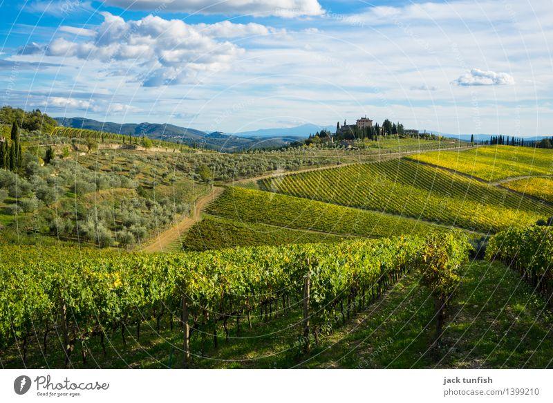Toskana Ferien & Urlaub & Reisen Tourismus Ausflug Sightseeing Natur Landschaft Herbst Feld Hügel Duft gelb gold grün Vorfreude Begeisterung Himmel Urlaubsfoto