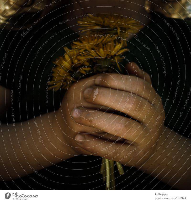 floristin Mensch Kind Hand Mädchen Blume Wiese Garten Religion & Glaube Geburtstag Finger Geschenk festhalten Löwenzahn Blumenstrauß Kleinkind Gebet