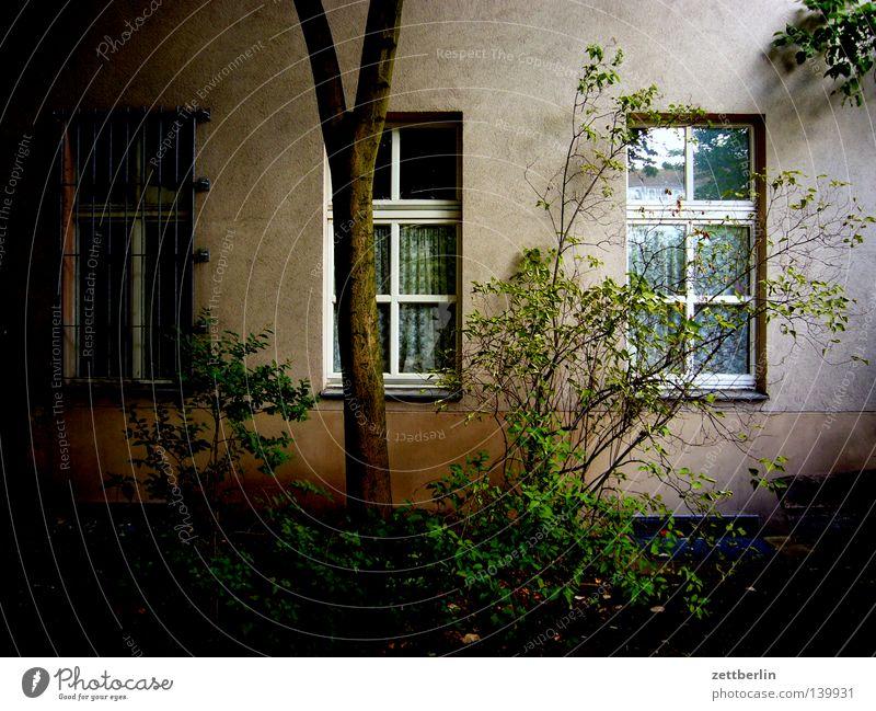 Hans Wurst Nachfahren Baum grün ruhig Haus dunkel Fenster Angst Wohnung Fassade Sträucher Frieden Häusliches Leben geheimnisvoll Hinterhof Mieter Stadthaus