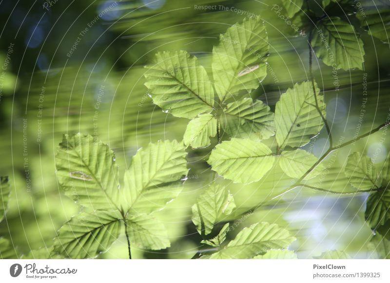 Blätterrauschen Natur Ferien & Urlaub & Reisen Pflanze grün schön Baum Landschaft Blatt Wald Gefühle natürlich Garten Lifestyle Park Wachstum wandern