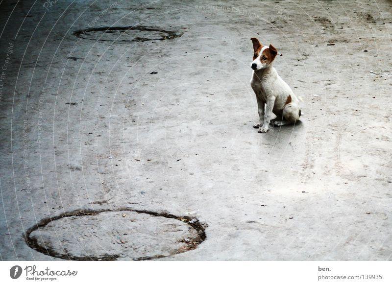 Hund Straße Hund dreckig Indien Welpe Delhi Bellen