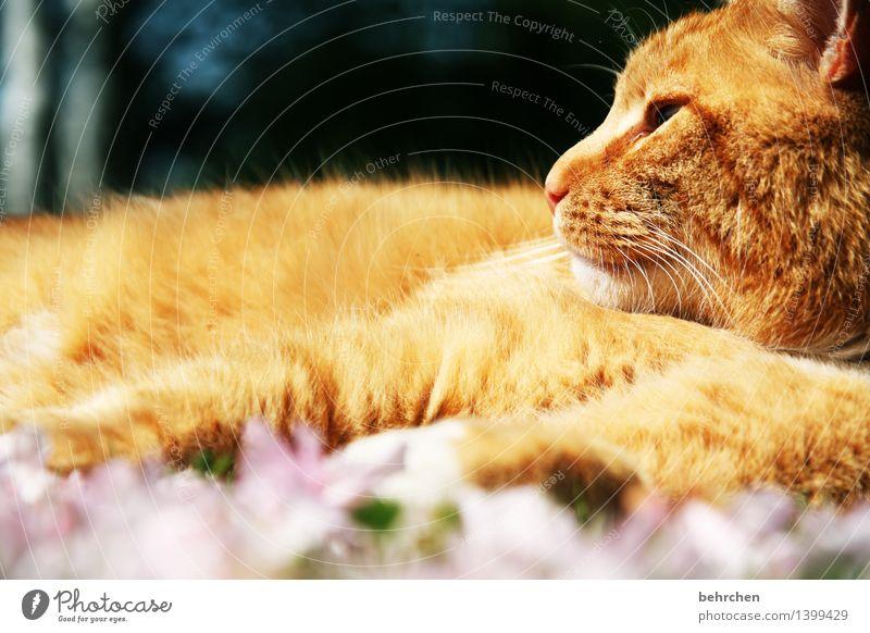 in sich ruhen Katze Natur Pflanze schön Sommer Blume Erholung Blatt Tier Blüte Frühling Wiese Garten orange Park träumen