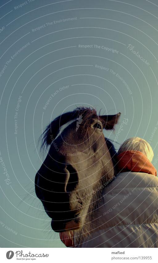 Vertrauen Pferd Maul Schnauze Nüstern Lippen Schnurrhaar weich Geruch atmen Neugier Kontakt Freundlichkeit zutraulich Frau blond Umarmen Erholung schwarz orange
