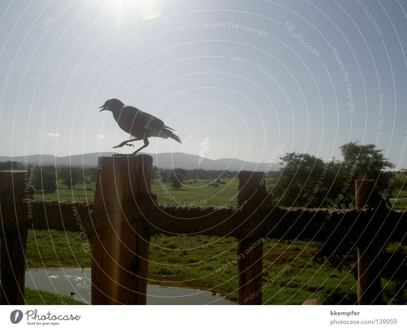 Lodge in Kenia Sonne Sommer Ferien & Urlaub & Reisen Tier Vogel Afrika Safari Hotel