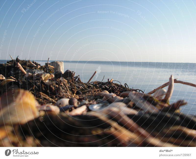 Deich-Meerblick Wasser Meer blau Holz Deutschland Muschel Stock Sylt unordentlich Deich Zweige u. Äste