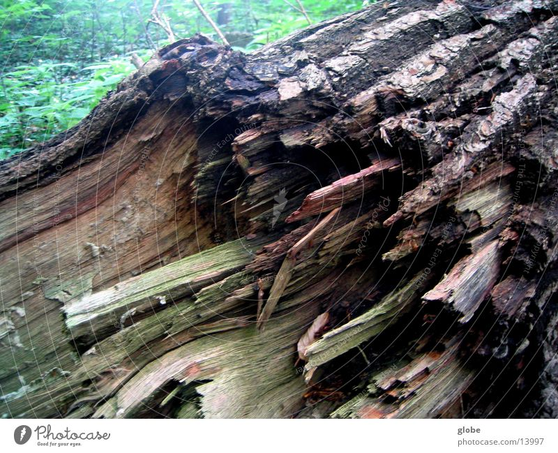 baumstumpf Wald Holz Baumrinde Splitter Baumstumpf