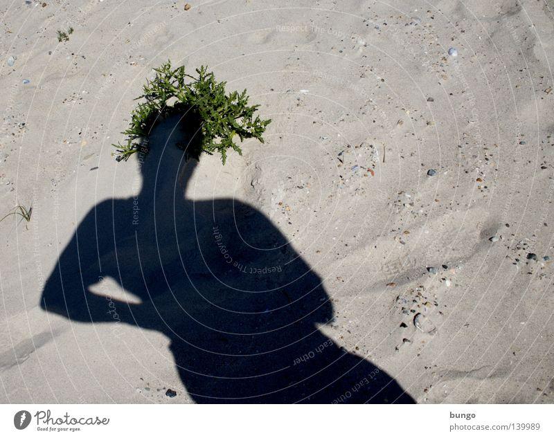 medusa herbaria Mann Meer Pflanze Strand Ferien & Urlaub & Reisen Kopf Haare & Frisuren Sand Küste Hut Krone Schattenspiel Sandstrand