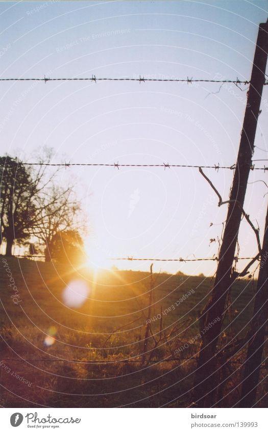 Sonne Wärme Feld Filmindustrie Bauernhof Himmelskörper & Weltall Medien Stacheldraht Tennessee