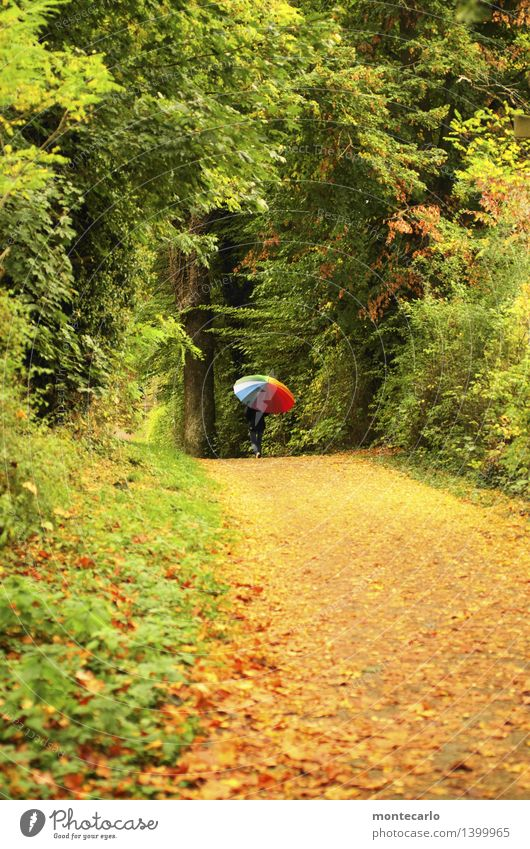 ...jetzt nicht mehr Mensch feminin Frau Erwachsene 1 30-45 Jahre Umwelt Natur Pflanze Herbst Klima schlechtes Wetter Baum Sträucher Blatt Grünpflanze