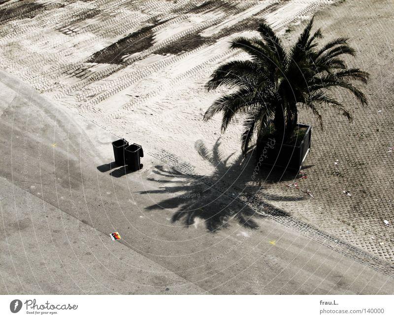 Mülltonnen Strand Straße Ernährung Spielen Sand Wohnung liegen Platz stehen Wüste Ende Club Deutsche Flagge Café Veranstaltung Palme