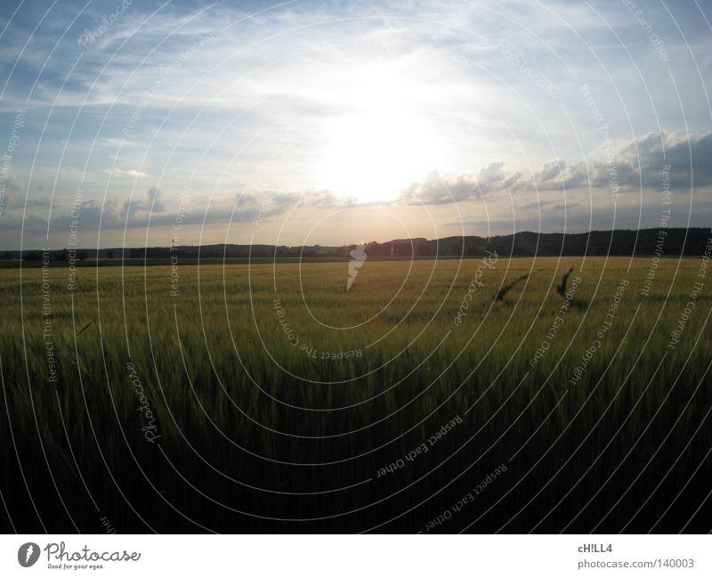 Sommermärchen Gerstenfeld Getreide Landwirtschaft weich gleich sanft ruhig Sonne hell Kraft Strahlung Lichterscheinung Spuren Arbeit & Erwerbstätigkeit