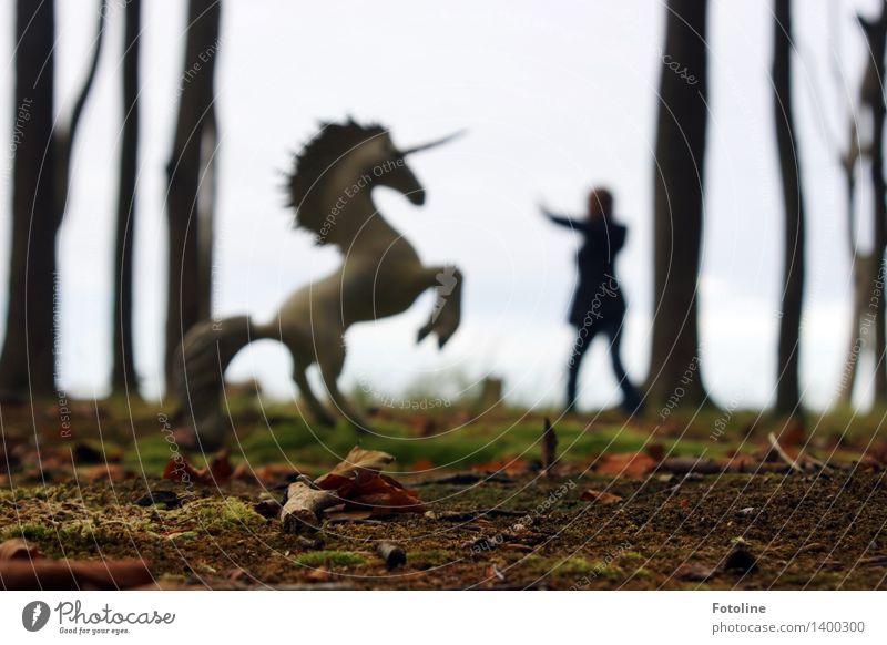 Traumsequenz Mensch Kind 1 Umwelt Natur Pflanze Tier Urelemente Erde Herbst Baum Wald fantastisch frei natürlich wild Einhorn Fabelwesen Märchenwald träumen