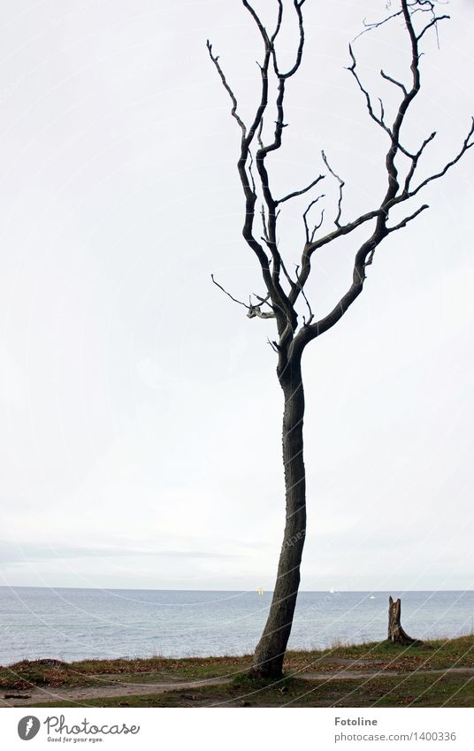 Solo für einen Baum Himmel Natur Pflanze Meer Landschaft Wolken Umwelt Herbst natürlich Küste Sand Erde Urelemente Ostsee spukhaft