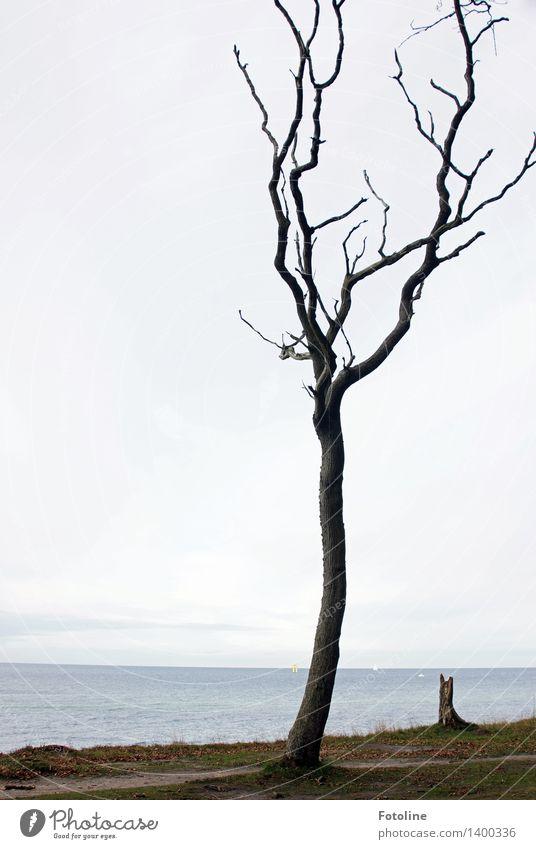 Solo für einen Baum Umwelt Natur Landschaft Pflanze Urelemente Erde Sand Himmel Wolken Herbst Küste Ostsee Meer natürlich Gespensterwald spukhaft Nienhagen