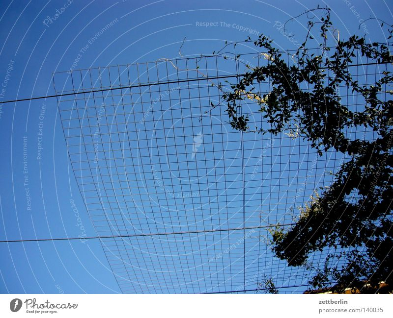 Wachstum Himmel blau himmelblau Gitter Ranke Netzsicherheit Hecke Pflanze Dornröschen Sommer Grenze Käfig Vogelkäfig Abtrennung Detailaufnahme rankhilfe Raster