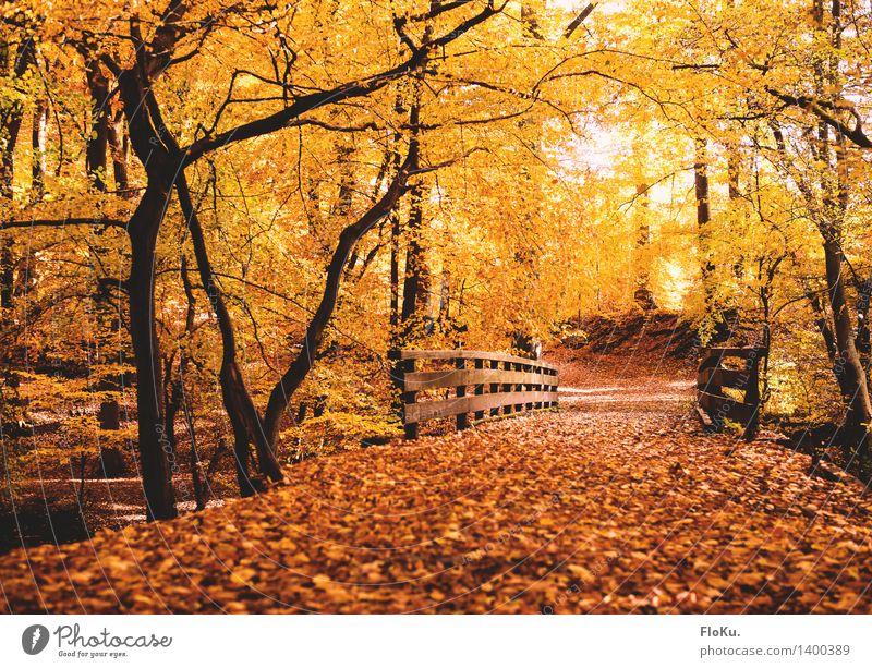 Herbst im Wald Umwelt Natur Landschaft Schönes Wetter Baum Blatt Verkehrswege Wege & Pfade Brücke natürlich Wärme gelb gold orange herbstlich Herbstfärbung