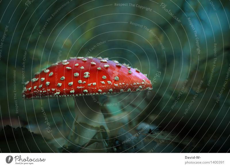 neulich im Märchenwald Natur Pflanze schön rot dunkel Wald Umwelt Herbst Wiese Gesundheitswesen leuchten gefährlich fantastisch bedrohlich Jahreszeiten geheimnisvoll