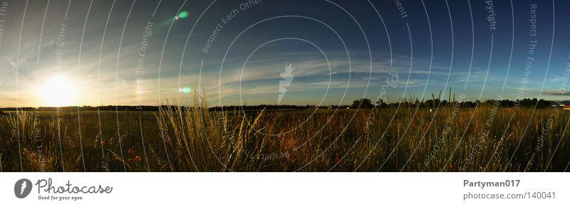 Sonnentanz im Gras Himmel blau grün Baum rot Sonne Sommer Wolken gelb Wiese Leben Bewegung Gras Freiheit Horizont Stimmung