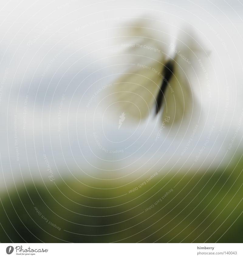 wonderland träumen dramatisch Unschärfe Schmetterling Natur Tier Insekt Landschaft Landschaftsformen fliegen Wunder staunen wandern ruhig Erholung schön