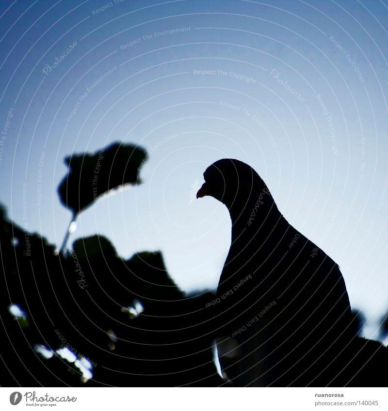 Baum blau Blatt schwarz Tier dunkel Park Graffiti Vogel elegant Taube stechen Lanze