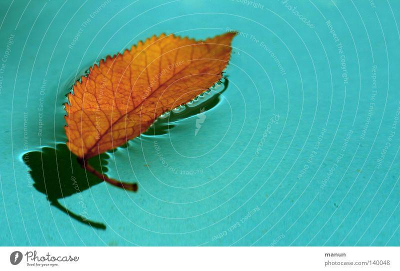 la feuille Blatt Blattadern Wasser Wassertropfen Tropfen Schatten türkis blau gelb rot orange färben schwarz untergehen frisch nass Im Wasser treiben fallen