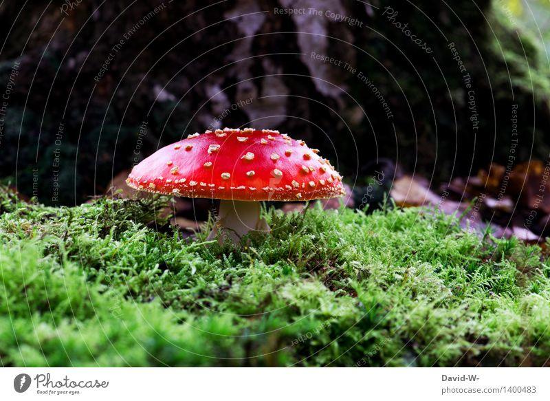 es ist wieder soweit Umwelt Natur Landschaft Erde Sonnenlicht Herbst Wetter Schönes Wetter schlechtes Wetter Pflanze Moos Park Wald bedrohlich grün rot Punk