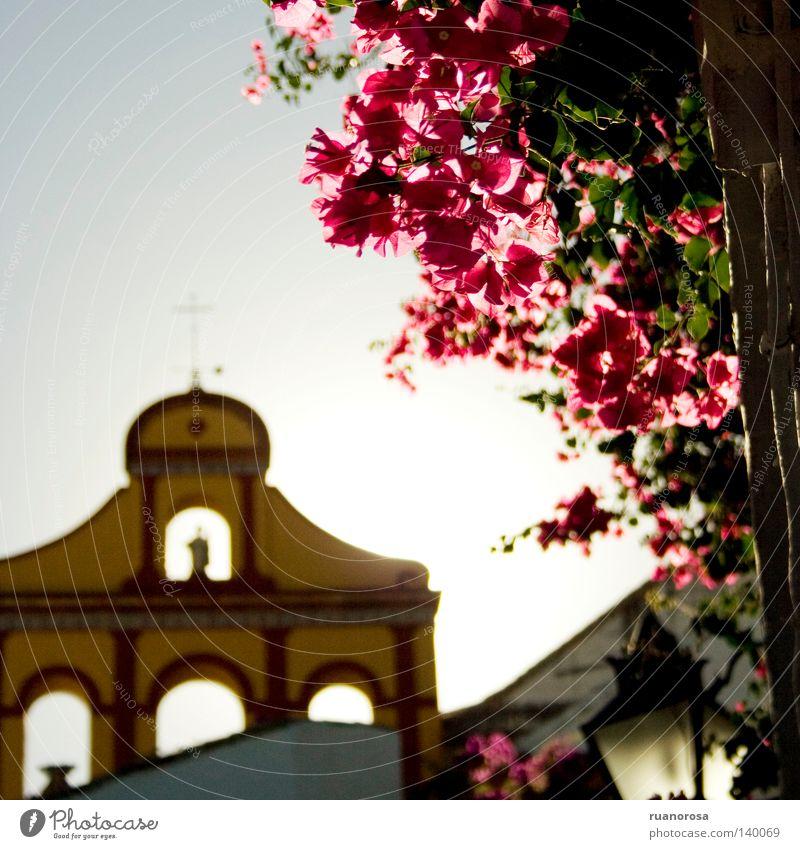 Bailio Himmel Blume grün blau Pflanze rot gelb Lampe Blüte Kirche Dach Blühend Kreuz Belgien Straßenbeleuchtung Kruzifix