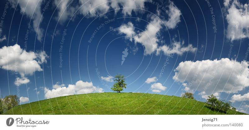 Die Erde ist rund. Natur Himmel Baum Sommer Wolken Wiese Gras Landkarte Erde groß Globus Panorama (Bildformat) Planet