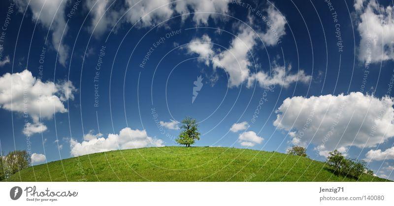 Die Erde ist rund. Natur Himmel Baum Sommer Wolken Wiese Gras Landkarte groß Globus Panorama (Bildformat) Planet
