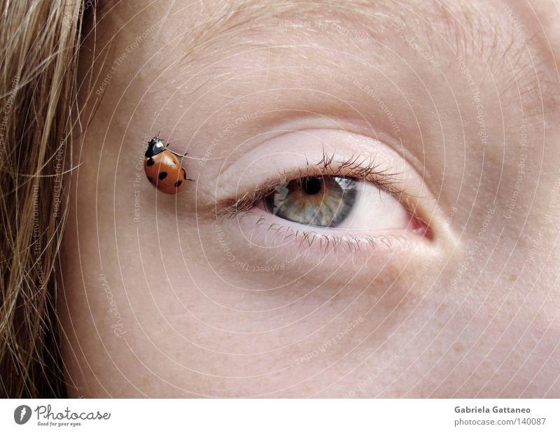 nah Marienkäfer rot krabbeln grün schön Glück Ladybird orange Käfer Angst Auge blau Natur Punkt Tierchen