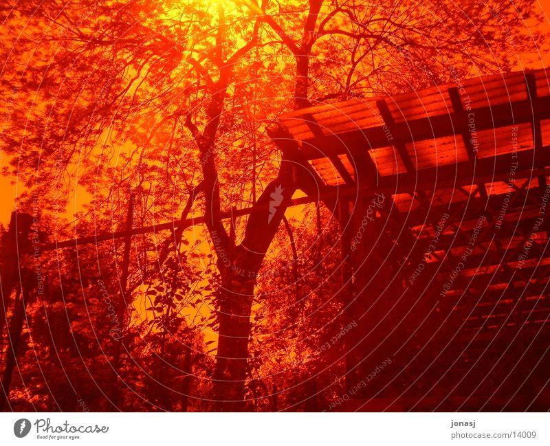 Glühend Baum Sonne rot Haus gelb hell Brand Filter glühend
