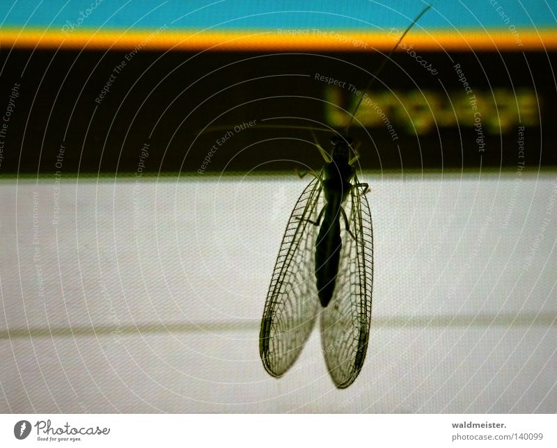 Sprachupdate Flügel Neugier entdecken Insekt Bildschirm Fühler Fremdsprache Website Informationstechnologie Sprache Florfliege