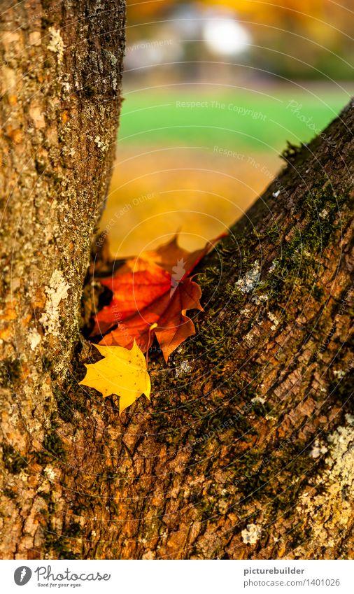 Im Winkel Natur alt grün Baum rot Landschaft Blatt gelb Herbst Holz Garten braun orange Park liegen Vergänglichkeit