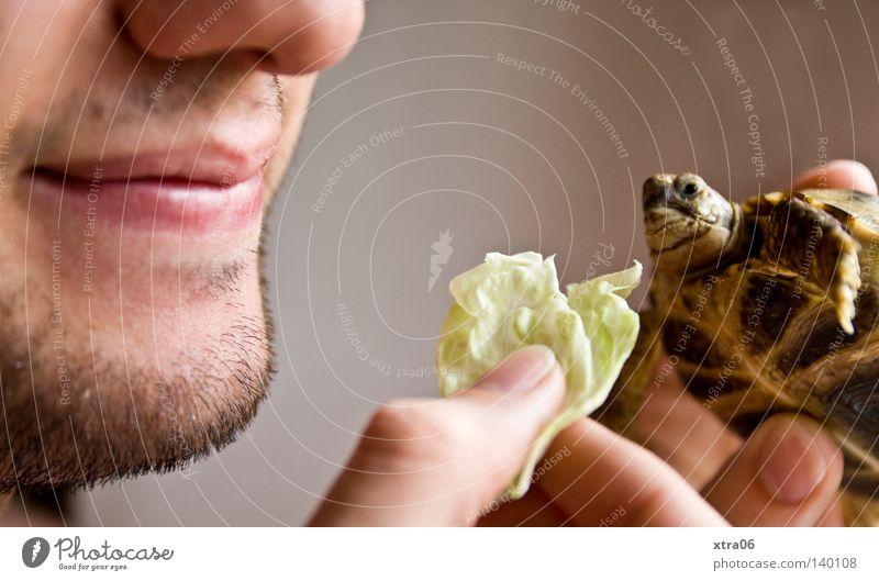 die fütterung Hand Ernährung Kopf Mund Essen Nase Finger Salat füttern Kinn Schildkröte Salatblatt