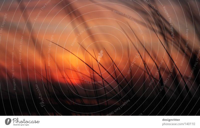 Abschied von Eden See Meer Nordsee Spiekeroog Schilfrohr Strand Stranddüne Abend Sommer Sonne Sonnenuntergang Dämmerung oben Wiedersehen gehen Trennung verloren