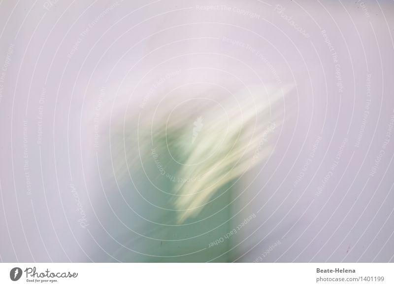 windig | kann Flügel verleihen Stil Streifen atmen Bewegung rennen Blick springen ästhetisch außergewöhnlich rund Geschwindigkeit schön gelb grün violett