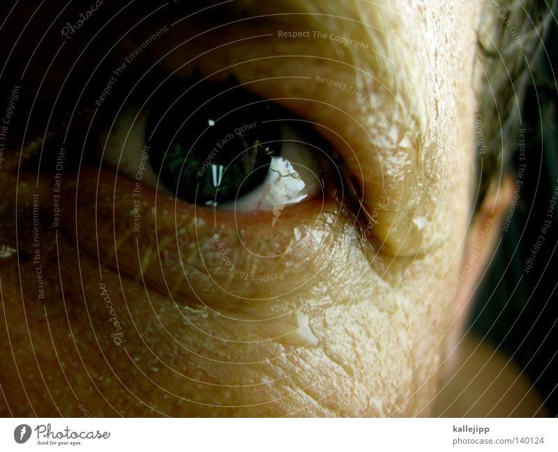 blickfeld Pupille Blick entdecken Hautfalten Falte Wasser Schweiß Wassertropfen Tropfen Strukturen & Formen Regenbogenhaut Wimpern Haare & Frisuren Ohr