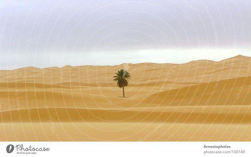 Palm tree in desert Baum Einsamkeit Afrika Wüste Palme Düne Sahara Naturliebe Sandsturm Libyen