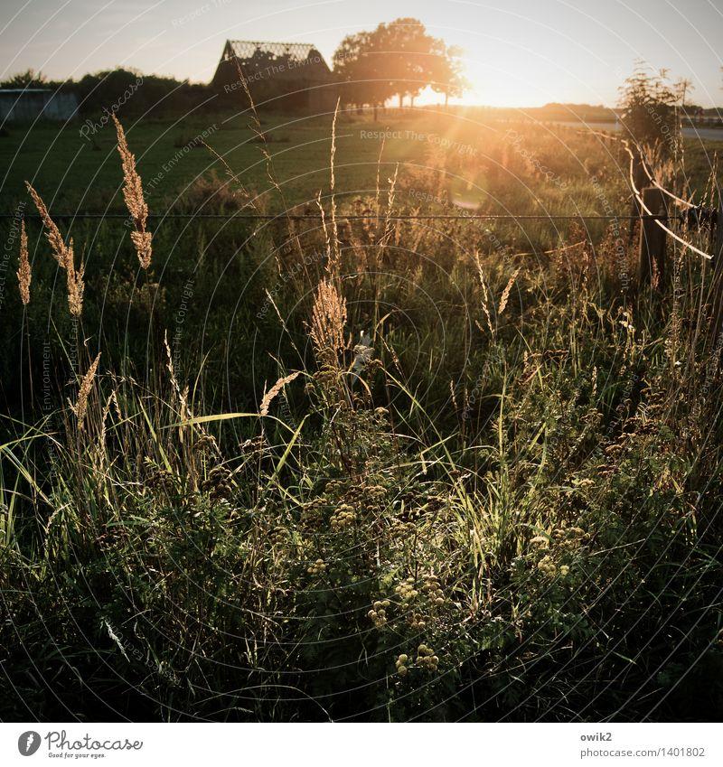Abendflirren Umwelt Natur Landschaft Pflanze Horizont Baum Gras Sträucher Wildpflanze Ruine Blühend glänzend leuchten natürlich Gefühle geheimnisvoll Hoffnung