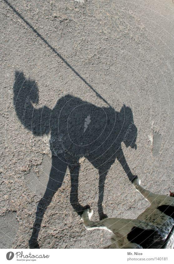 DoppelDog Schatten Hund Asphalt Wege & Pfade Straße Gasse Spaziergang gehen Silhouette Jagdhund scheckig gefleckt Fell weiß Schwanz Welpe angeleint Beine