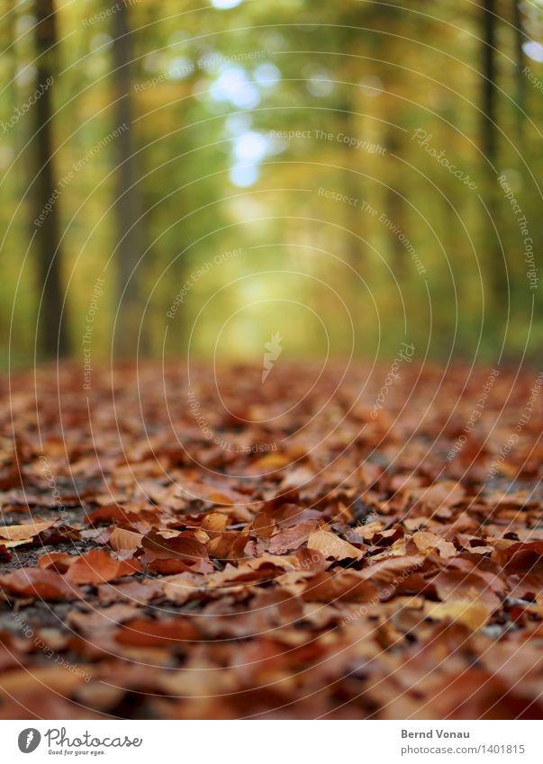 Nichts wie Weg! Umwelt Natur Landschaft Pflanze Herbst Baum Wald Gefühle Stimmung Herbstlaub braun grün Wege & Pfade nah welk trocken unten Boden Himmel