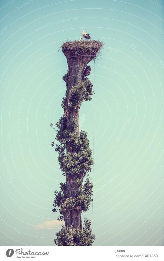 Penthouse Himmel blau grün weiß Baum Tier schwarz Tierjunges Vogel Zusammensein Häusliches Leben Idylle Wildtier hoch Nest Storch